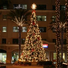 Oregon Cascade Fir Christmas Tree