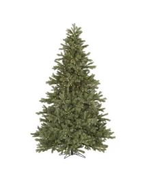 Frasier Fir Tree