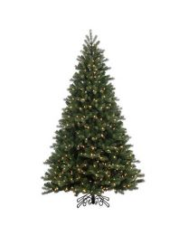 Noble Spruce Instant Shape