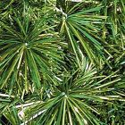 14/4-2 Royal Pine Garland