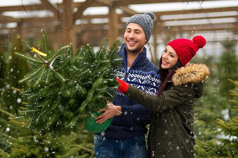 How to Select a Christmas Tree