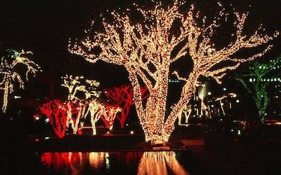 Ask Jason: What Are the Best Christmas Lights for Outdoor Foliage Lighting?