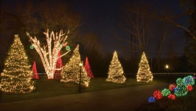 LED Christmas Lights on evergreen trees