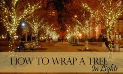 How to Wrap a Tree in Lights