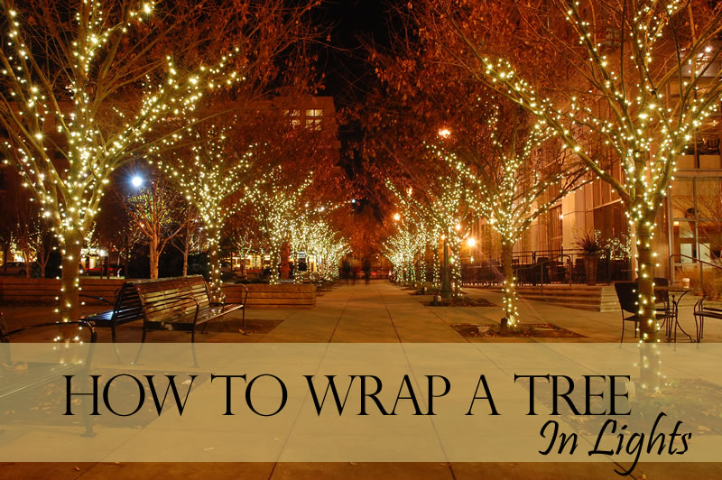 how to wrap a tree in lights christmas designers