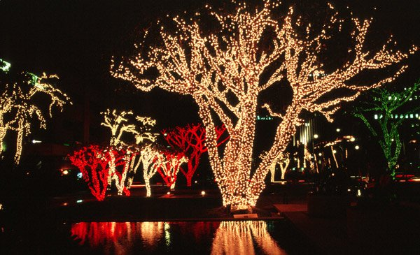 What Are The Best Christmas Lights For
