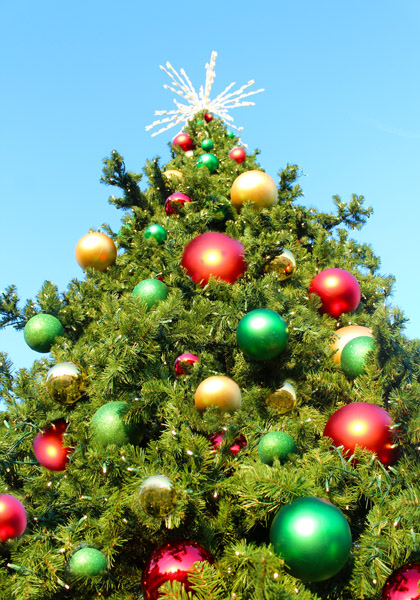 Ornaments on a Majestic Mountain Pine Commercial Christmas Tree