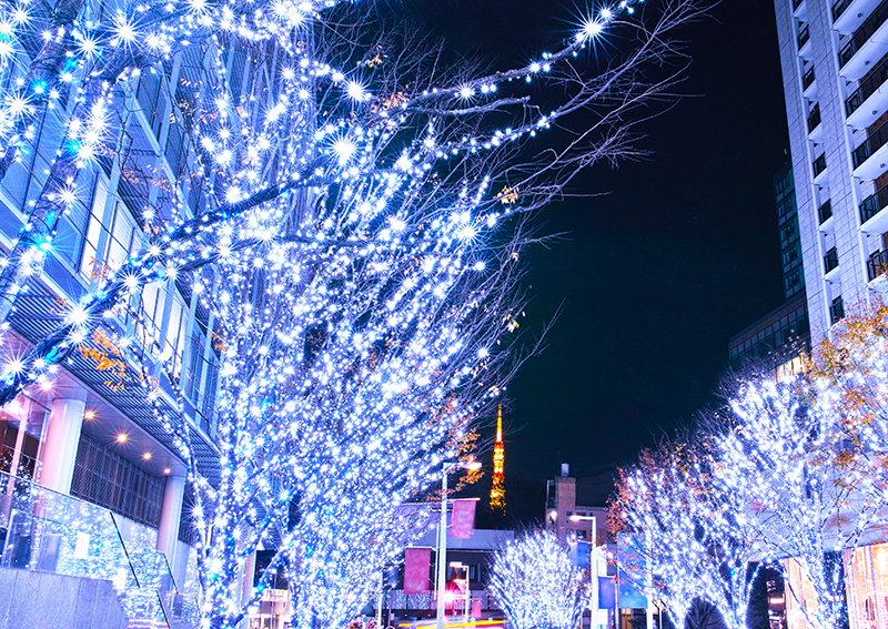 Professional Christmas Lights