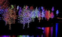 "Tap Into the Power of ""Color Consolidation"" for Your Christmas Light Display"