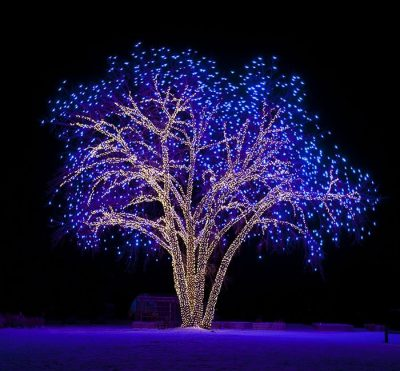 Large Tree Wrapped by Professional Christmas Light Installers