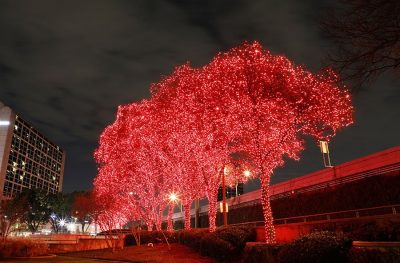 Large tree wrapped in red Christmas lights